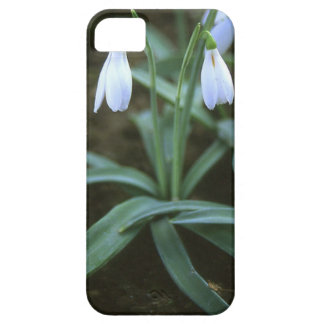 Crimean Snowdrop Closeup iPhone SE/5/5s Case