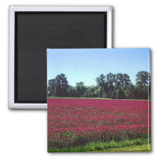 Crimson Clover Field Magnet