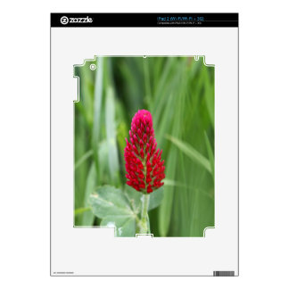Crimson Clover Skins For iPad 2