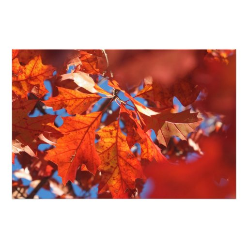 Crimson Fall Art Photo