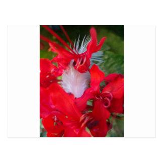 Crimson.jpg extranjero hermoso tarjeta postal