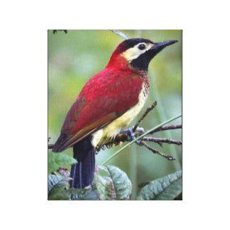 Crimson-Mantled Woodpecker Canvas Print