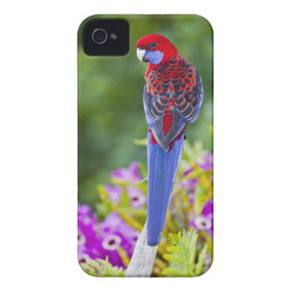 Crimson Rosella & backdrop of orchids Lamington iPhone 4 Case-Mate Case