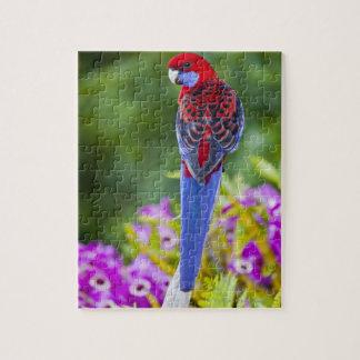 Crimson Rosella & backdrop of orchids Lamington Jigsaw Puzzle