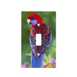 Crimson Rosella & backdrop of orchids Lamington Light Switch Cover