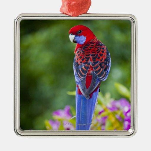Crimson Rosella & backdrop of orchids Lamington Ornament