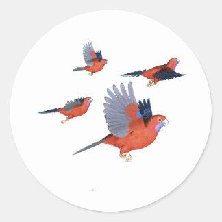 Crimson Rosella Parrot Flock Classic Round Sticker