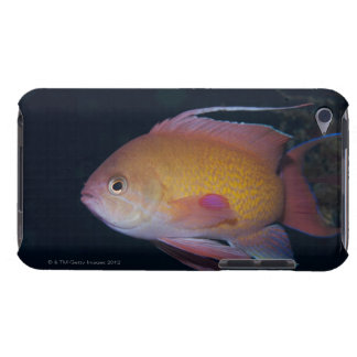 Crimson Seabream Barely There iPod Case