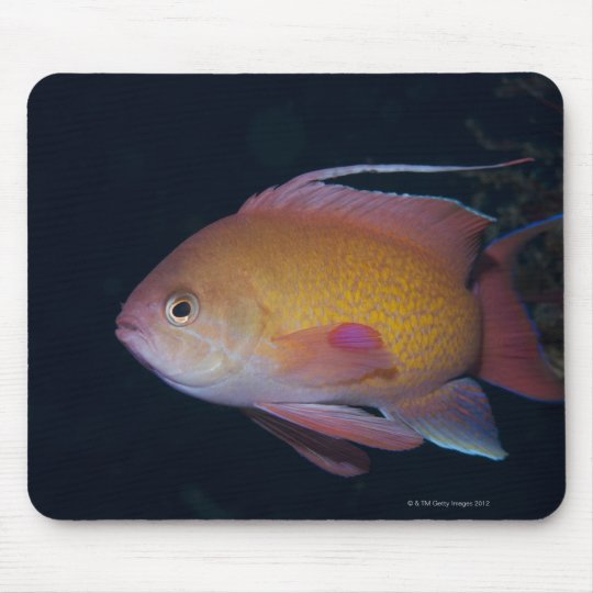 Crimson Seabream Mouse Pad