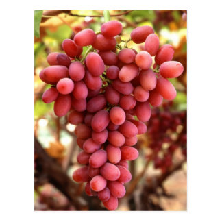Crimson Seedless Grapes Postcard