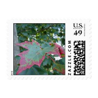 Crimson Sunset Postage Stamps