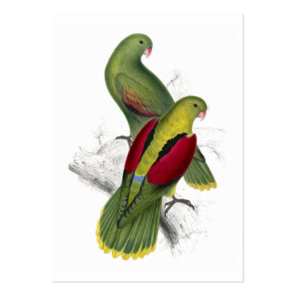 Crimson-Winged Parrakeet (Female and young male) b Large Business Card