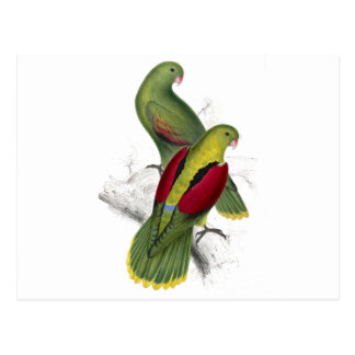 Crimson-Winged Parrakeet (Female and young male) b Postcard