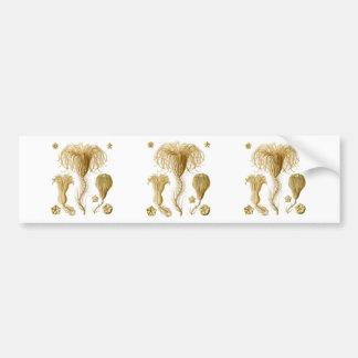 Crinoids Car Bumper Sticker