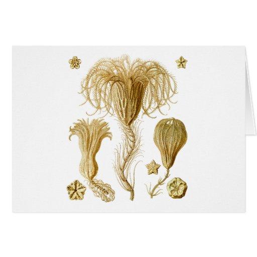 Crinoids Greeting Cards