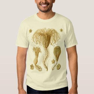 Crinoids T Shirt