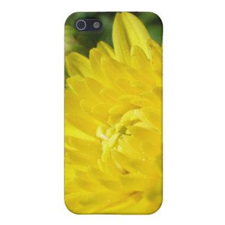 Crisantemo amarillo iPhone 5 carcasa