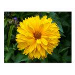 Crisantemo amarillo postal