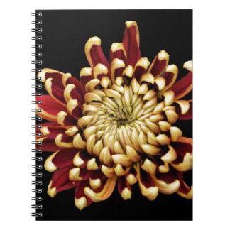 Crisantemo bicolor cuadernos