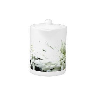 Crisantemo blanco y negro de la flor de la nieve