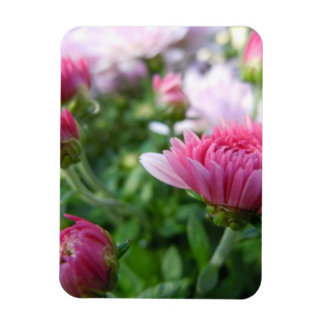 Crisantemo floreciente iman
