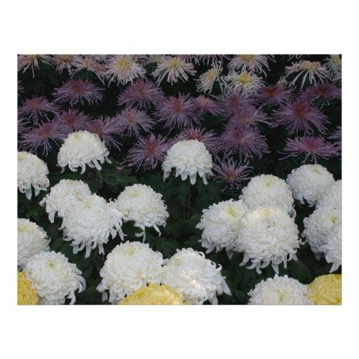 "Crisantemo Folleto 8.5"" X 11"""