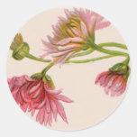 Crisantemo - pegatina