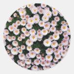 Crisantemo Pegatina Redonda