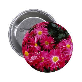 Crisantemo rojo 'Priscilla Pins