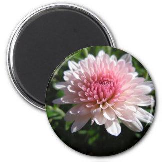 Crisantemo rosado bonito imán redondo 5 cm