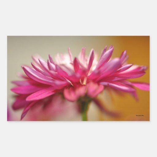 Crisantemo rosado pegatina rectangular