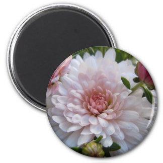 Crisantemo rosado suave imán redondo 5 cm