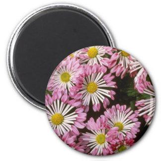 "Crisantemo rosado ""tipo espátulas"" (florista Chrys Imán"