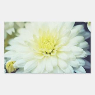 Crisantemo texturizado pegatina rectangular