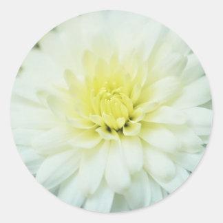 Crisantemo texturizado pegatina redonda