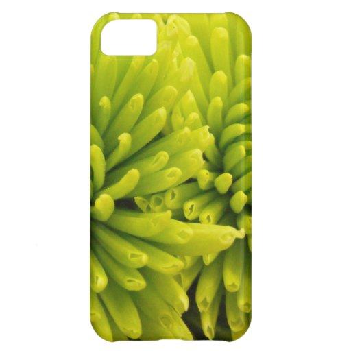 Crisantemo verde carcasa iPhone 5C