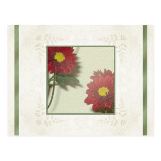 Crisantemos del moho del otoño tarjetas postales
