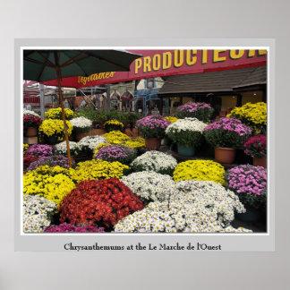 Crisantemos en el Le Marché de más l'Ouest Impresiones
