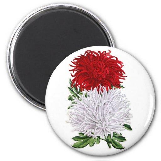 Crisantemos japoneses - salador del granate y de J Imán De Nevera