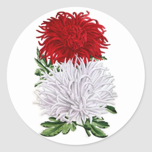 Crisantemos japoneses - salador del granate y de pegatina redonda