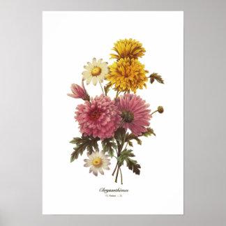 Crisantemos Posters