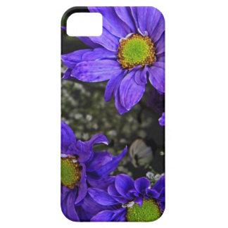 Crisantemos púrpuras del verde azul iPhone 5 Case-Mate cárcasa