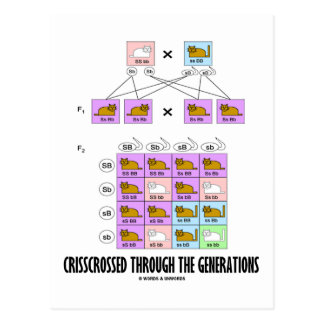 Crisscrossed Through The Generations (Cat Punnett) Postcard