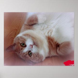 ¡Cristal, amo gatos! Póster