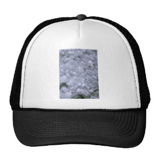 cristal gorras