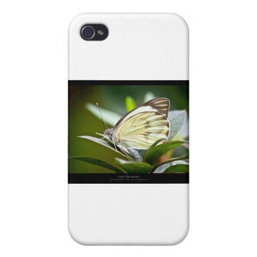 Critters 007 del jardín - Buterfly iPhone 4/4S Fundas