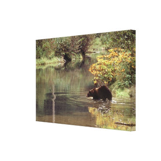 Critters - Bears - Salmon River Grizzly Canvas Print