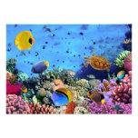Critters coloridos del arrecife de coral