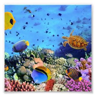 Critters coloridos del arrecife de coral fotografías