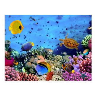 Critters coloridos del arrecife de coral postal